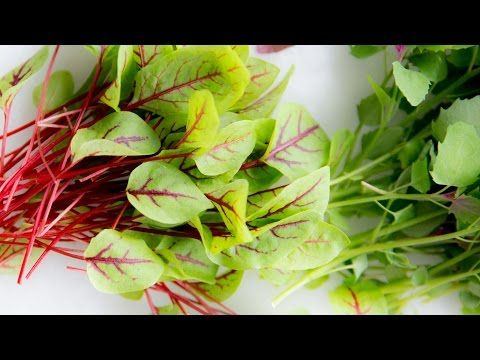Microgreens Recipe grow from start to on the plate - YouTube