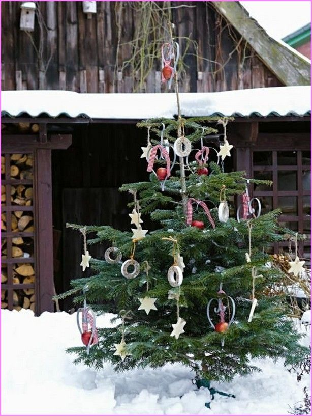 Image For California Backyard Christmas Trees California Backyard Christmas  Trees | Home Design Ideas Good Ideas