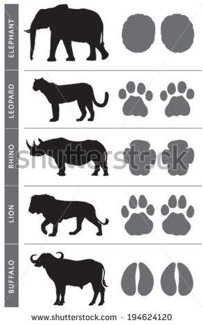 Africa's Big Five Animal Tracks: Elephant, Lion, Leopard, Buffalo and Rhino
