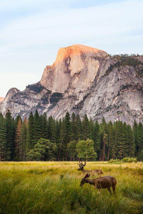 Wallpaper Iphone Yosemite Best 50 Free Background