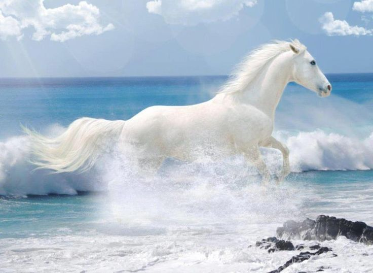 the summer of beautiful white horse The summer of the beautiful white horse questions and answers - discover the enotescom community of teachers, mentors and students just like you that can answer any question you might have on the .