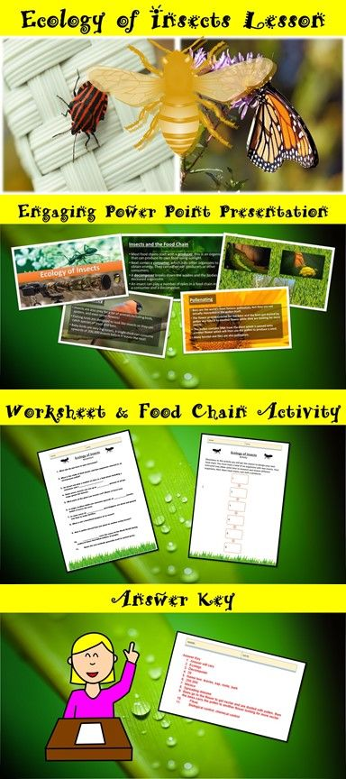 the 25 best food chain worksheet ideas on pinterest food chains rainforest food chain and. Black Bedroom Furniture Sets. Home Design Ideas