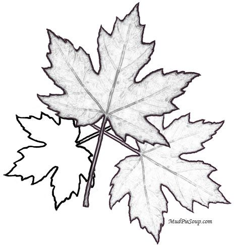 maple leaves, printable leaf, fall coloring