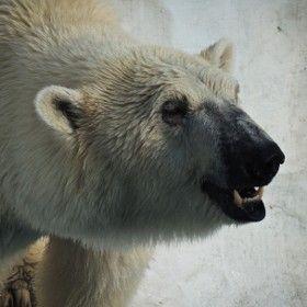 Polar Bear / 500px