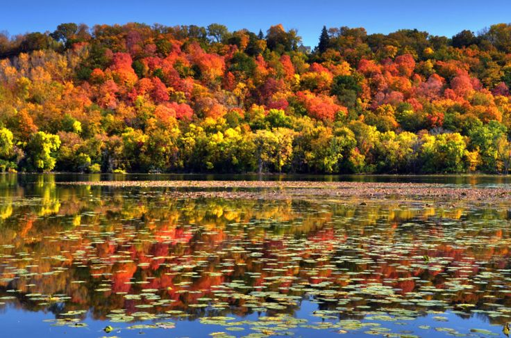LILYDALE, MINNESOTA While Minnesota isn't exactly known for its changing seasons, fall color does exist! Visit Lilydale Regional Park for stunning lakeside foliage along the Mississippi River.