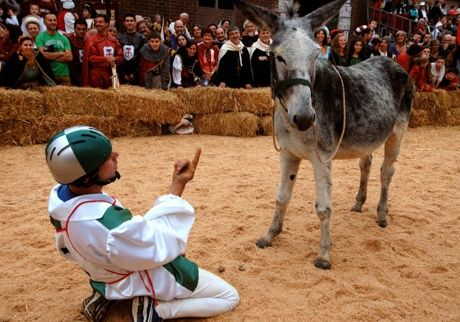 Donkey Palio of Alba #festivals #events #piemonte #italy #provinciadicuneo