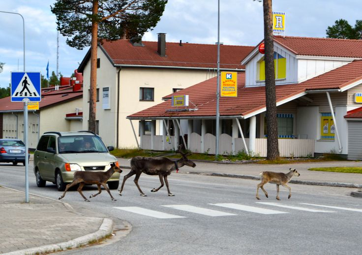Ordinary day in Suomussalmi City in Finland - (the pin via Sisko Sherman • https://www.pinterest.com/pin/79938962113597058/ )