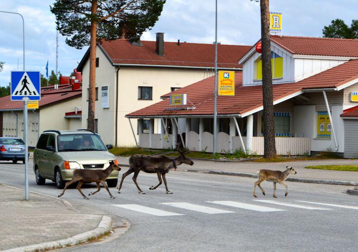 Ordinary day in Suomussalmi City in Finland - (the pin via Sisko Sherman • https://www.pinterest.com/pin/79938962113597058/ )