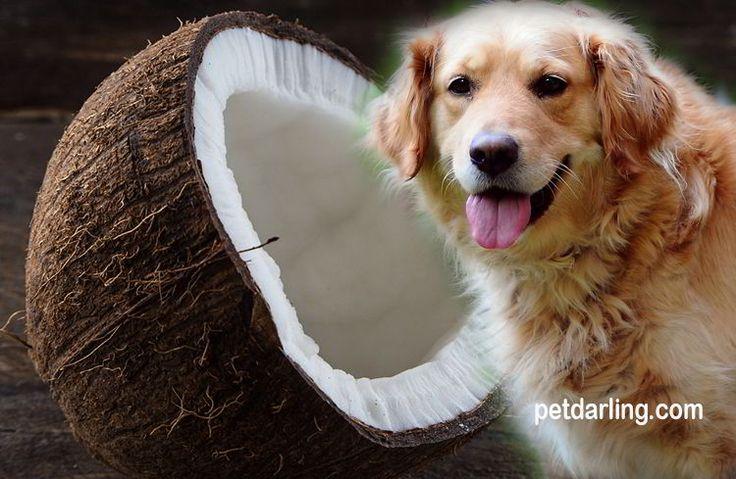 propiedades del aceite de coco para perros