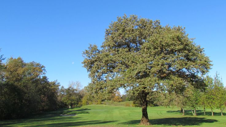 Oak Golf Club Udine - Italy