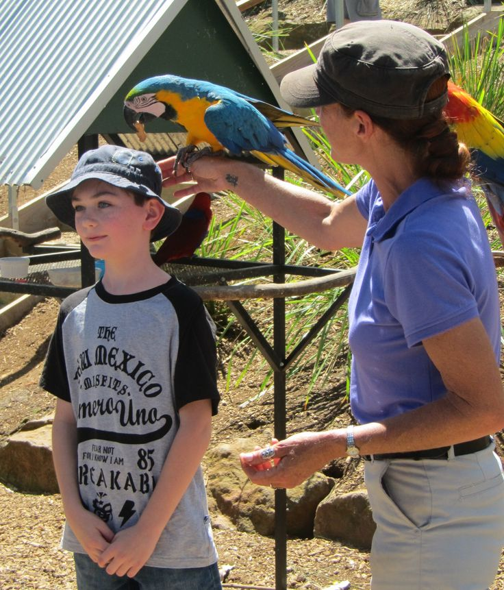 Getting to know the locals at Maleny Botanic Gardens Aviary