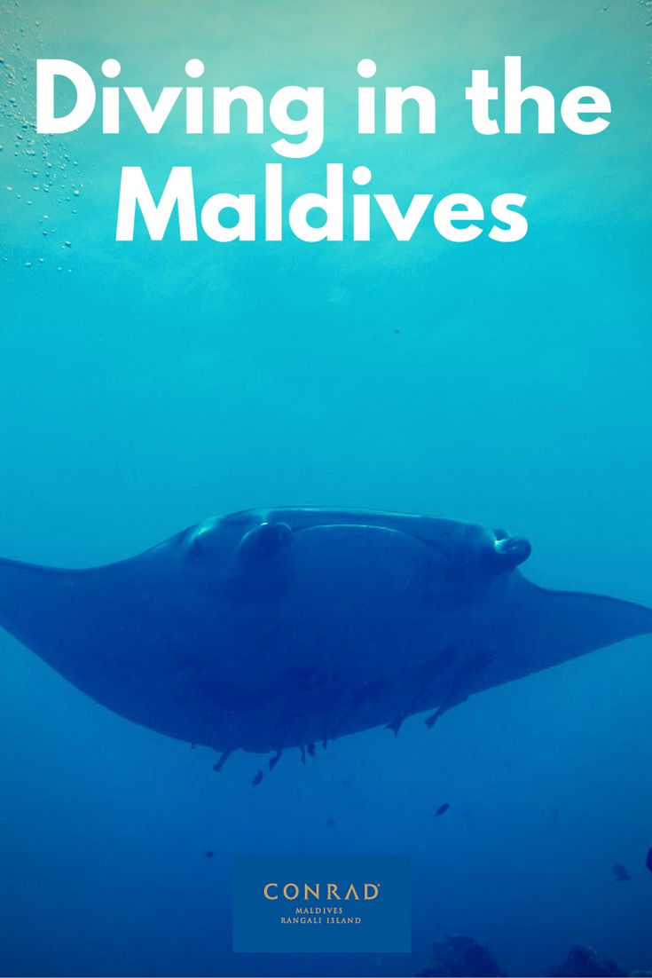The SubAqua team at the Conrad Maldives was amazing. The diving experience you get there just raises the bar. Full review inside.