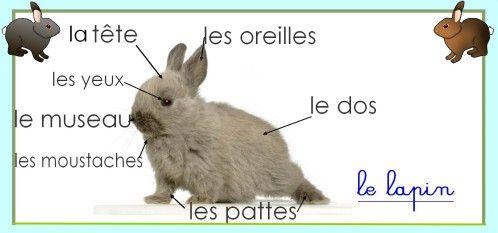 Différentes fiches d'identités à imprimer. Plusieurs animaux proposés - Le lapin en français - labeling a rabbit in French