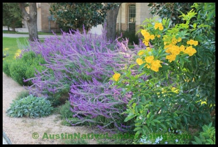 drought tolerant plant landscape | Native Landscaping Portfolio And Reviews - Austin Native Landscaping ...