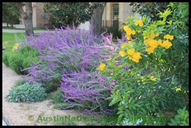 drought tolerant plant landscape | Native Landscaping Portfolio And Reviews - Austin Native Landscaping ...