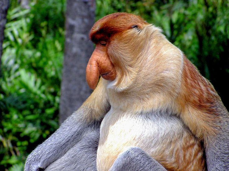 Borneo : un paradis naturel au carrefour de nombreuses cultures