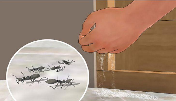 4 rimedi naturali contro le formiche