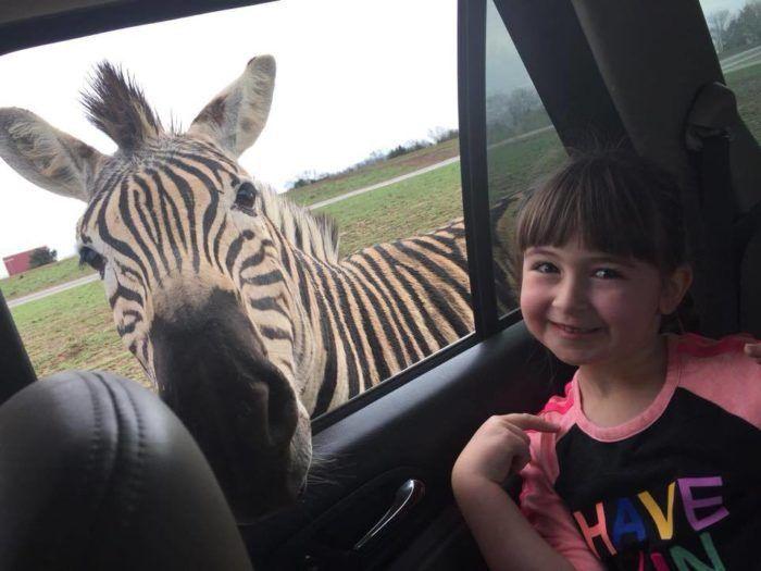 Adventure Awaits At This Drive Thru Safari Park In Tennessee Nashville Trip Safari Park Nashville