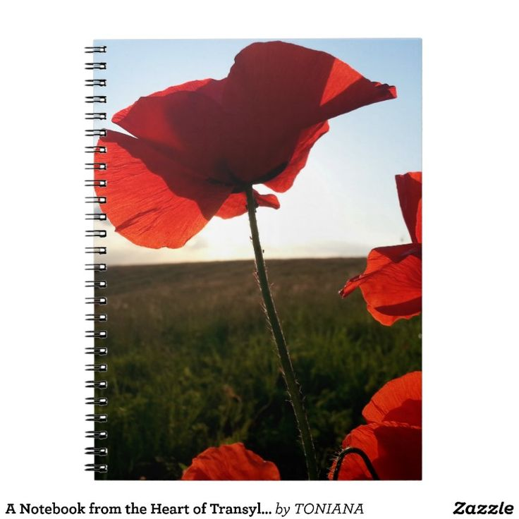 A Notebook from the Heart of Transylvania