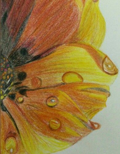 PencilColors#Flower