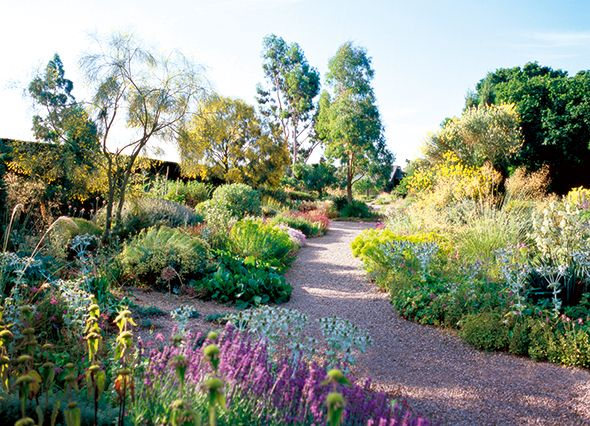 Beth Chatto's gravel garden in Essex fromThe Lady Magazine