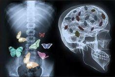 Бабочки в животе и тараканы в голове