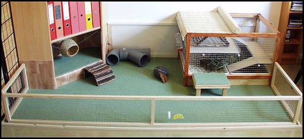 17 best images about hedgehog cage on pinterest cavy for Discount guinea pig supplies