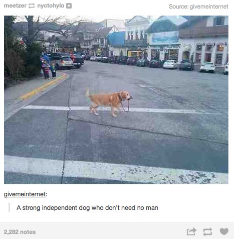 This dog knows what it wants, and it wants to walk.  -A