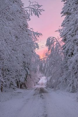 Pastel sunset in winter land with purple and pink colors. Available as poster at printler.com, the marketplace for photo art. Photographer Sami Rahkonen.