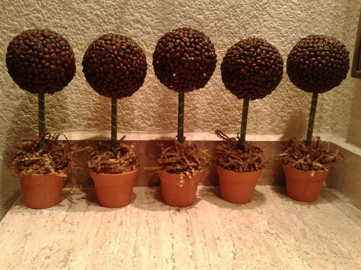 Coffee Bean Topiary Trees