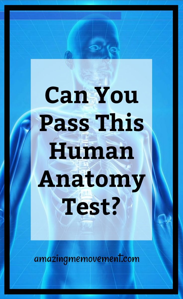 Can You Pass This Human Anatomy Test? Find Out Now