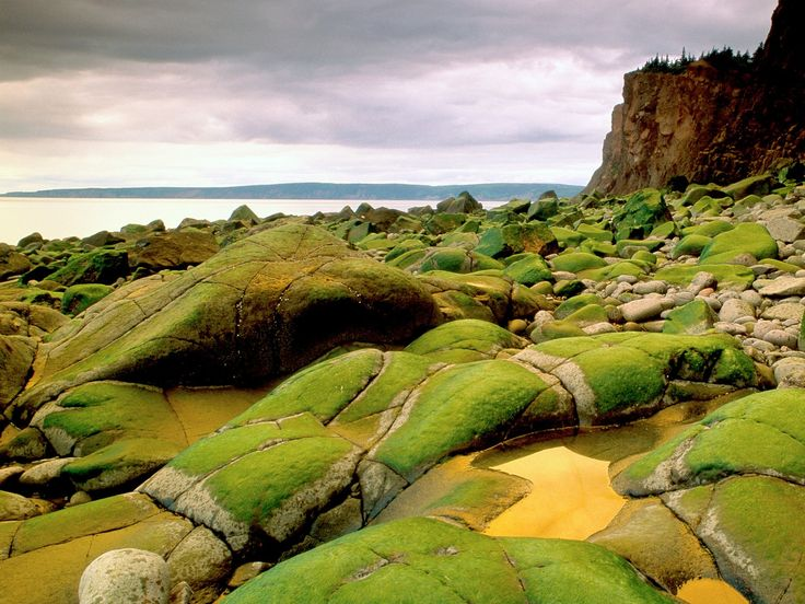 A stunning coastline and gorgeous cliffs make the Bay of Fundy one of the world's great natural sites, and its spectacular tides—the world's highest, it's said—add an element of painterly beauty.