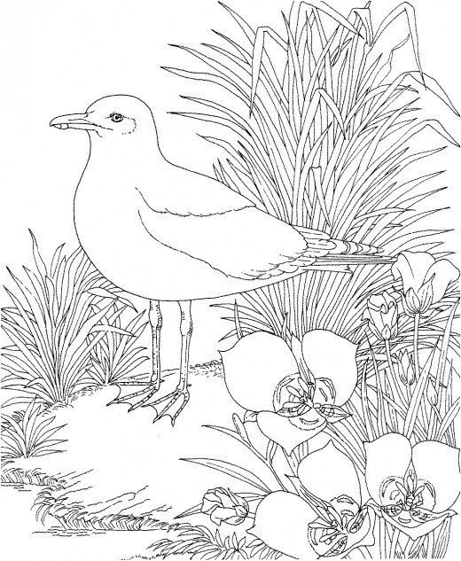 26 best Birds images on Pinterest Coloring books, Vintage coloring - copy northern mockingbird coloring pages