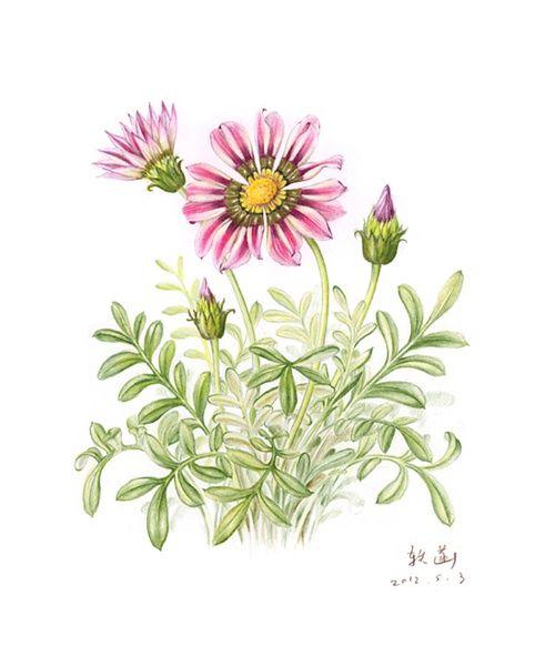 Рисунки цветка в стакане