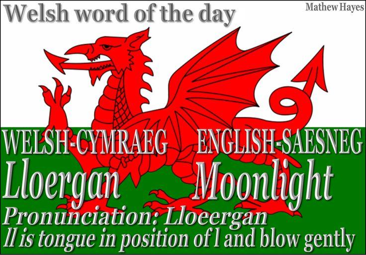 Welsh word of the day: Lloergan/Moonlight