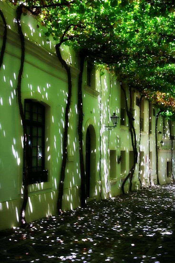 Calle emparrada + Calle emparrada de las bodegas de Tio Pepe en Jerez de la Frontera + sun dappled