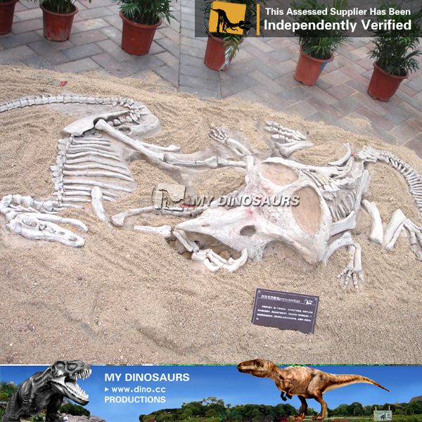 My Dino-museum Original Size Dinosaur Bone , Find Complete Details about My Dino-museum Original Size Dinosaur Bone,Dinosaur Bone,Original Size Dinosaur Bone,Museum Dinosaur Bone from Other Amusement Park Products Supplier or Manufacturer-Zigong My Dinosaurs Culture And Arts Co., Ltd.