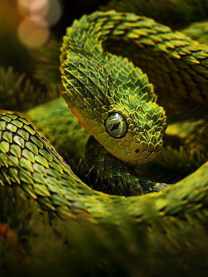 Rckeyru Follow Me Click Here To Follow Schone Schlangen Reptilien Und Amphibien Reptilien