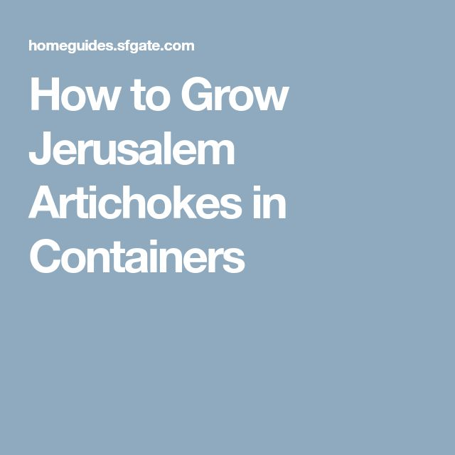 How to Grow Jerusalem Artichokes in Containers