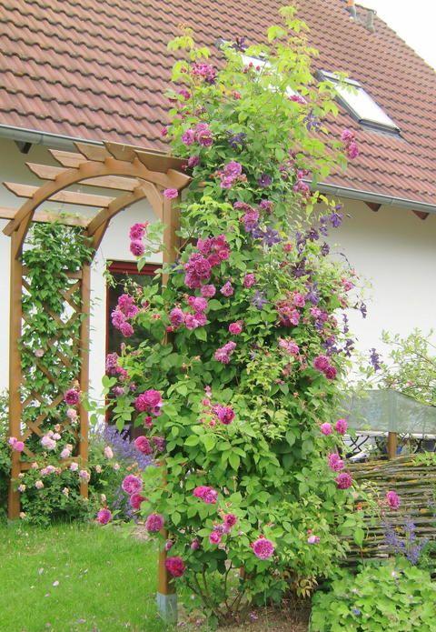 meinschöner garten spektakuläre abbild der caffceaabd mama mia roses roses