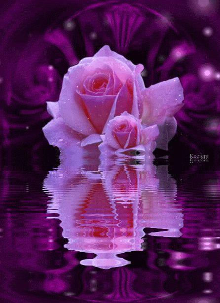 animated flower reflection | Flowers, Beautiful Flowers, Animated Flowers, Roses, Keefers photo ...