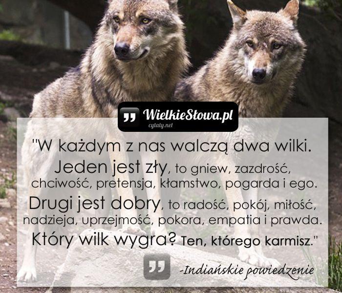"""""""W każdym z nas walczą dwa wilki. Jeden jest zły, to gniew, zazdrość, chciwość, pretensja, kłamstwo, pogarda i ego. Drugi jest dobry, to radość, pokój, mił"""