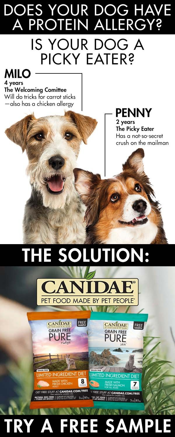 Protein Allergy Picky Eater We Ve Got The Solution Dry Dog Food Food Animals Pet People
