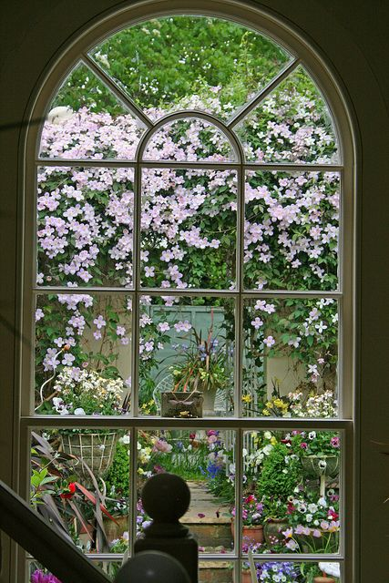 lovely garden framed by window                                                                                                                                                                                 Más