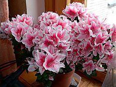 Натуральные удобрения для комнатных растений.
