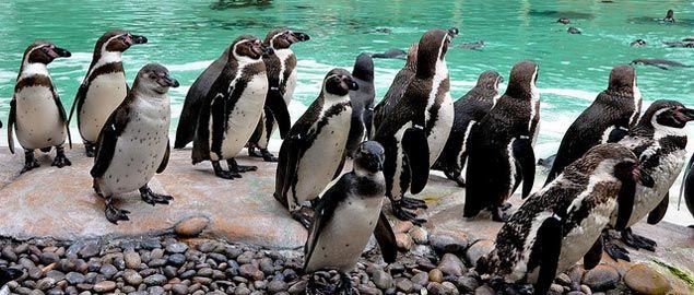 Biglietti: http://www.awin1.com/cread.php?awinmid=2887&awinaffid=164218&clickref=&p=https%3A%2F%2Ftickets.zsl.org%2Fdefault.asp Inclusa nel London Pass:  http://www.vivilondra.it/LondonPass.html  Aperto al pubblico dal 1847, il London Zoo ospita più di 800 specie diverse tra mammiferi, felini, pesci e uccelli per un totale di oltre 20mila esemplari. A pochi passi da tigri, giraffe e buffi pinguini, per un'esperienza divertente adatta a persone di ogni età.