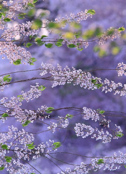 shades of lilac and lavender ~ so pretty