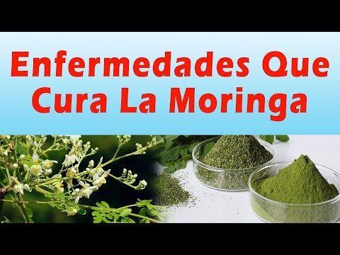 ENFERMEDADES QUE CURA LA MORINGA Para Que Sirve La Planta Moringa Beneficios y Propiedades - YouTube