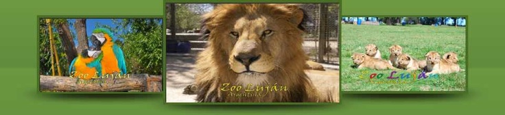 Zoo de Lujan- Argentina  You can pet the lions and tigers and bears. OH MY!!
