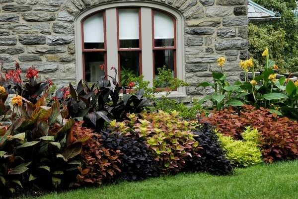 Coleus and canna lilies, love the garden color & texture contrasts